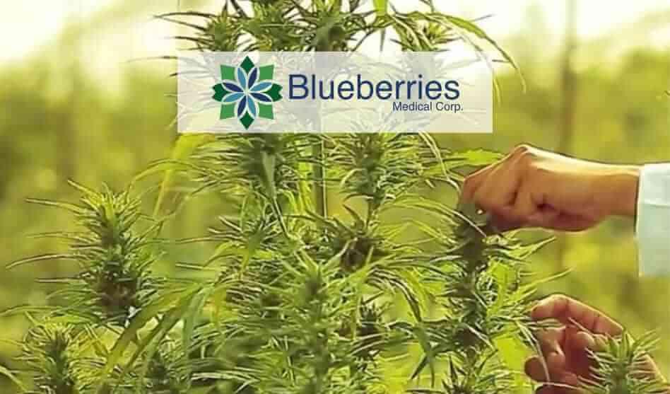 Blueberries Medical Corp. (CSE: BBM / OTC: BBRRF / FRA: 1OA) – Achieving Milestones / Revenue Generation Imminent – Update