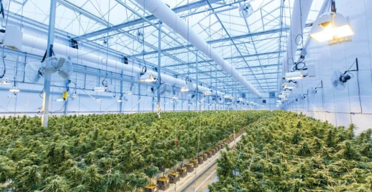 Kaya Holdings Inc. (OTCQB: KAYS) – Vertically Integrated U.S. Cannabis Company to Tap into Growth Opportunities in Europe – Introductory Note