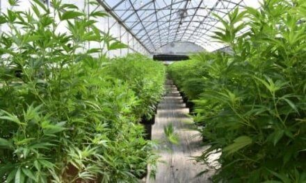 Grown Rogue International Inc. (CSE: GRIN / OTC: GRUSF)Expecting a Revenue Spike in H2-2021 – FINAL REPORT
