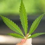 Kiaro Holdings Corp.(TSXV: KO) A Growing Cannabis Retailer Led by Aurora's Co- Founder – Initiating Coverage